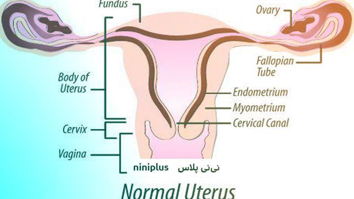 علت ضخامت کم آندومتر و رابطه ضخامت اندومتر و بارداری چیست؟