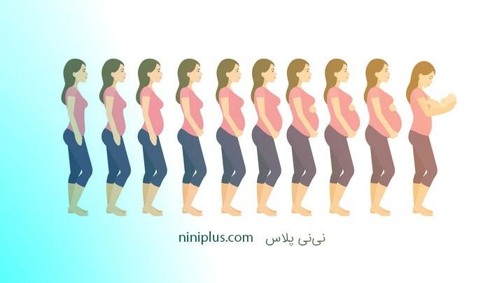 اندازه شکم مادر در دوران بارداری