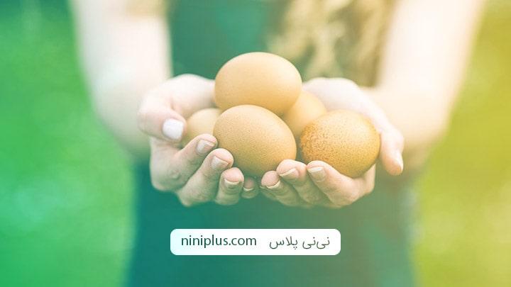 آیا خوردن تخم مرغ در دوران شیردهی بی خطر است؟