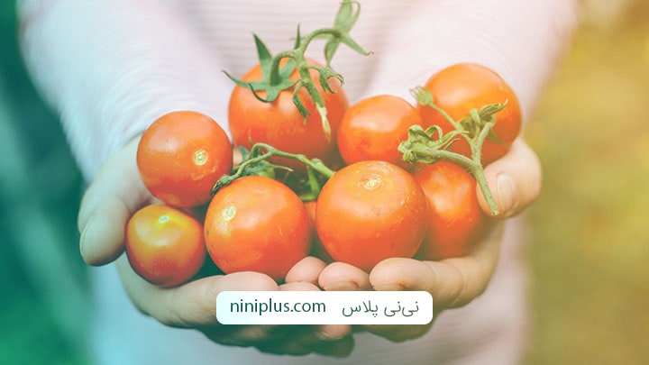 آیا خوردن گوجه فرنگی در بارداری بی خطر است؟