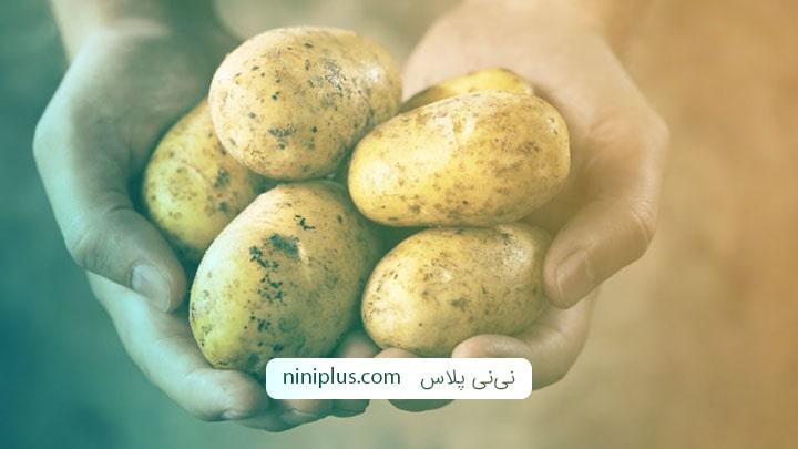 آیا خوردن سیب زمینی در بارداری مضر است؟