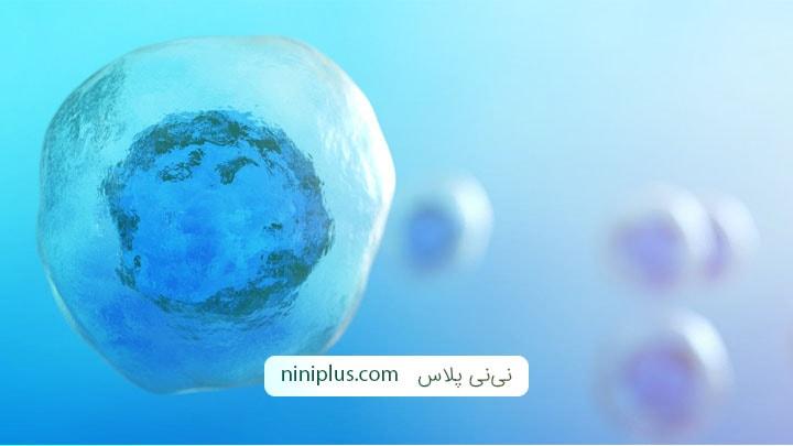 نگهداری از سلول های بنیادی نوزاد