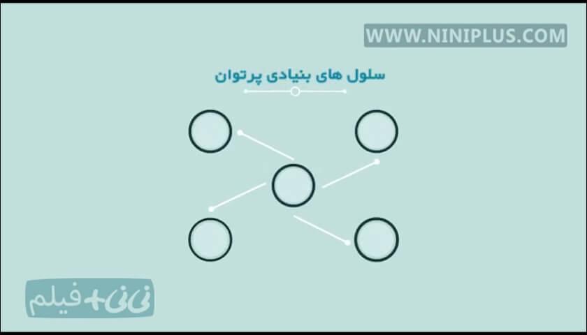 عملکرد سلول های بنیادی