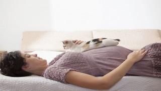همه چیز درباره بارداری و نگهداری از حیوانات خانگی نی نی پلاس
