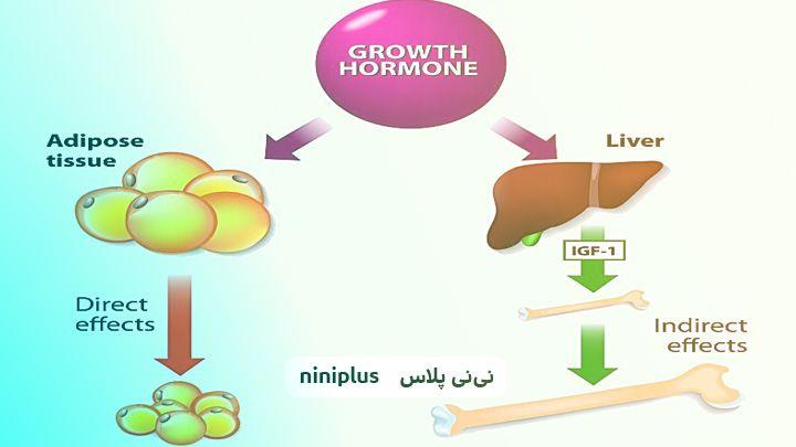 هورمون FSH یا هورمون تحریککننده فولیکول چطور تنظیم میشود؟