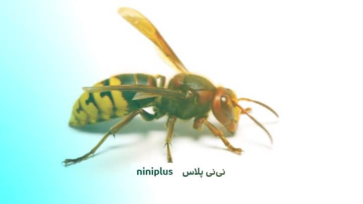 نیش زنبور در کودکان ونحوه کنترل و درمان نیش زنبور چگونه است؟