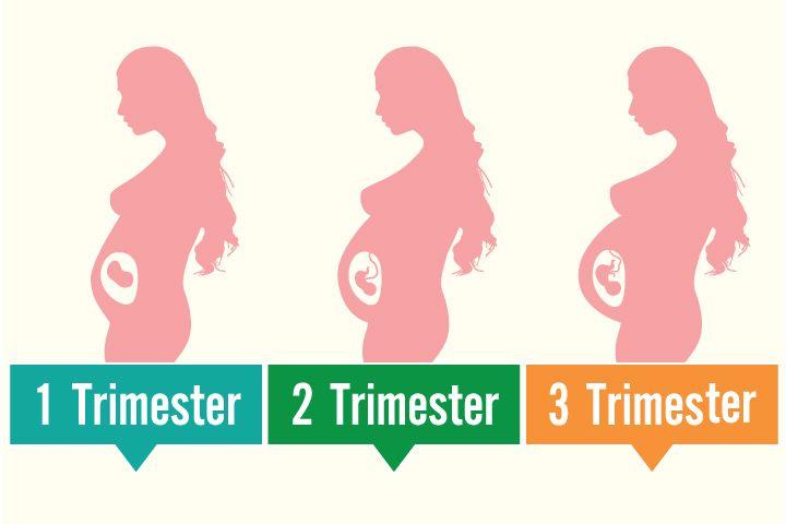 تغییرات اندازه رحم در ماه های مختلف بارداری