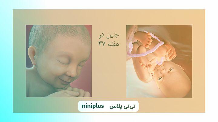 عکس جنین در هفته سی و هفتم بارداری تصویر و اندازه جنین