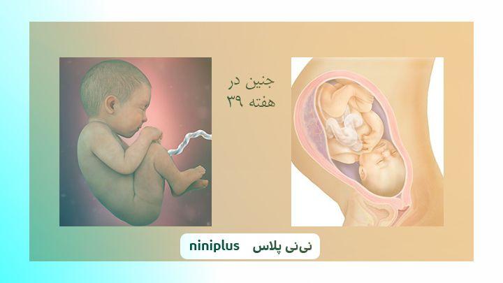 عکس جنین در هفته سی و نهم بارداری تصویر و اندازه جنین
